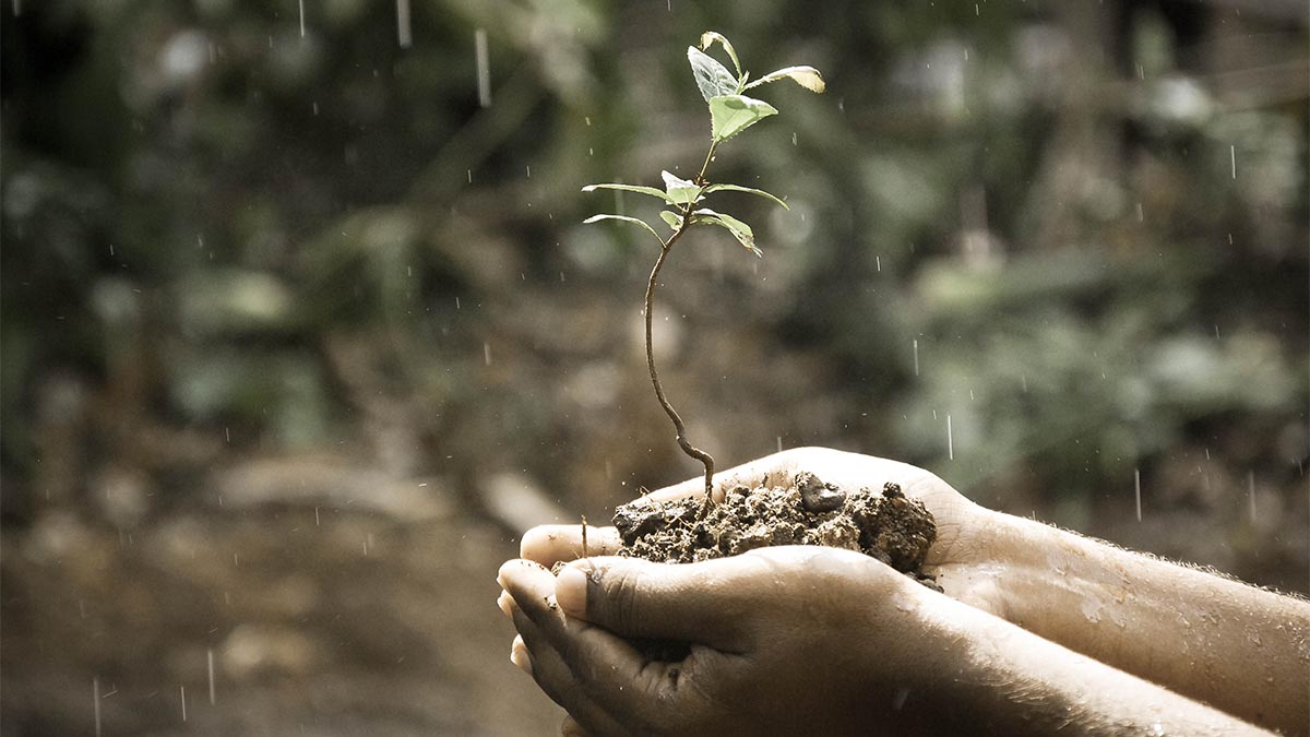 I Must Tenderly Nourish Growth, Despite The Internal Downpour.